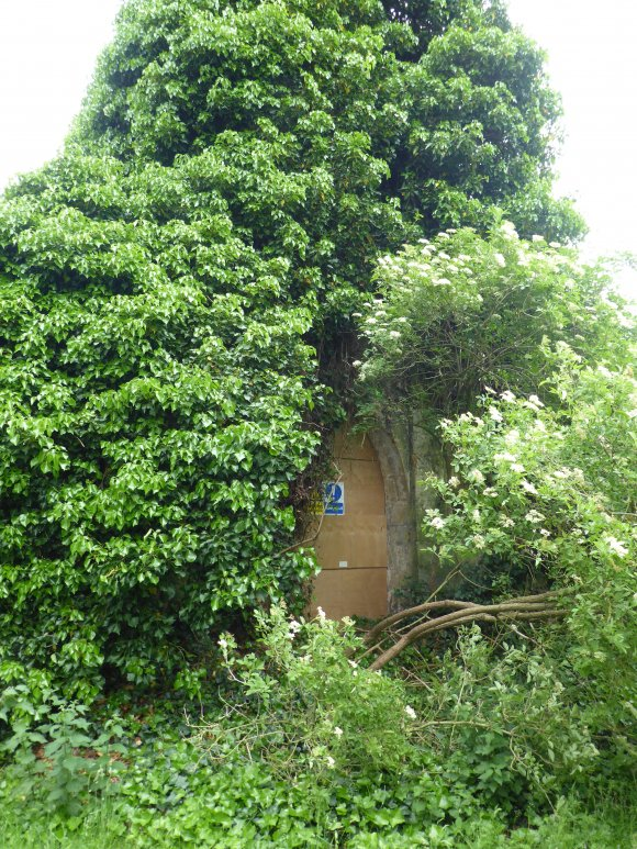 Old Chapel covered in ivy